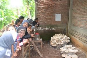 Jamur  berukuran jumbo yang tumbuh di pekarangan belakang masjid Al Ikhsan RT 01 RW 05 Dusun Cilengan, Desa Mojoroto, Kecamatan Mojogedang menjadi tontonan warga.