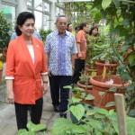 Menteri KesehatanNila Djuwita F. Moeloek saat melihat tanaman obat di B2P2TOOT Tawangmangu, Karanganyar, Minggu (22/03)