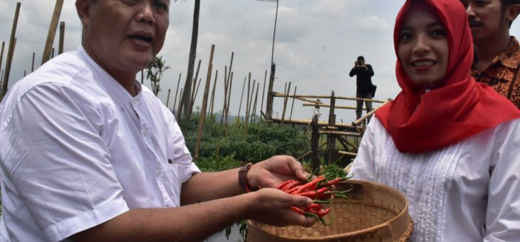 Panen Lombok di Ganten, Kerjo, Petani Undang Bupati Karanganyar